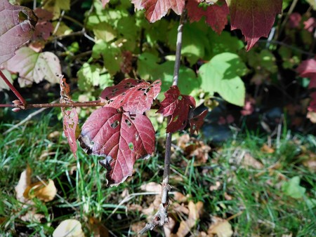 specific: The autumn leaf on the grass