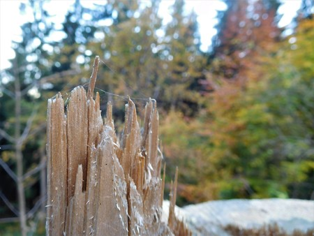 filings: The good detail on log and wooden chips in nature because the disaster dmaged trees and here is some photo.