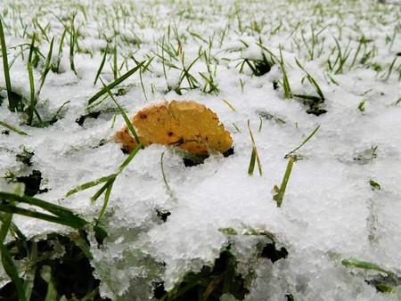 The garden grass under the first white snow