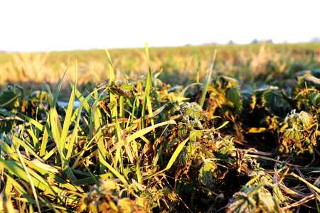 The beautiful small stems of grass grow on field with sunshine Stock Photo