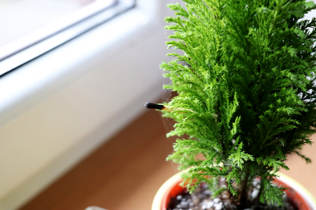 The wooden match in green plant in flowerpot