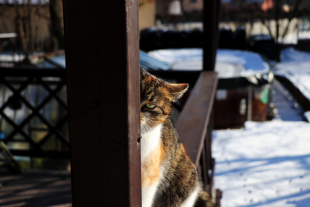 A cat who looking through wooden beam and play with me