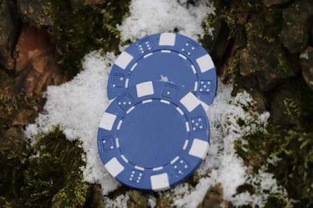 A two small jettons for poker and roulette located in bark of tree Stok Fotoğraf - 100255901