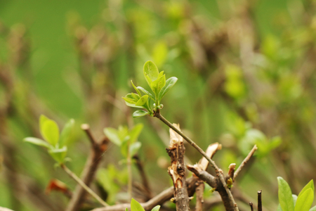 A beautiful growing of small leaves on the tree. Spring is here