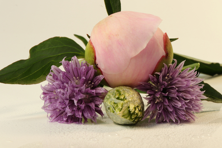 A detail on bloom of peony with chives blooms under peony with green leaves on the both side Stock Photo