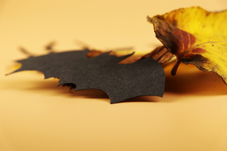 A black spider from side with autumn leave for best decoration for happy halloween. Look at it