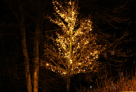 A beautiful christmas´s tree hanging with Christmas lights. In the Frydek Mistek park. Beautiful alley with this trees.