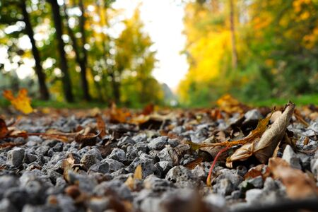Freak of nature in czech road in forest. Gravel road full of autumn colored leafs mainly marple. Autumn is in full swing. Wonderful trees around forest road Stok Fotoğraf