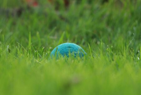 Hidden softenis ball in the garden. Interesting sport for young boys and girls. Ideal for two person. Round, green and plucked ball tucked in hole on the park