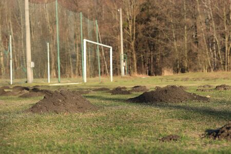 Small imp devastated whole village football field. Only one months was enough for mole, rascal to destroy grass surface.