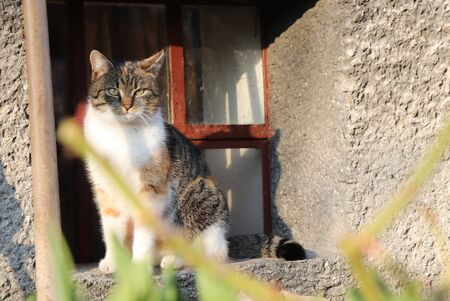 Sad lonely domestic cat is sitting on windowsill and waits on some her owner. SHe needs some love and care. Colored and brindled kitten relax on the back legs in window. Stok Fotoğraf