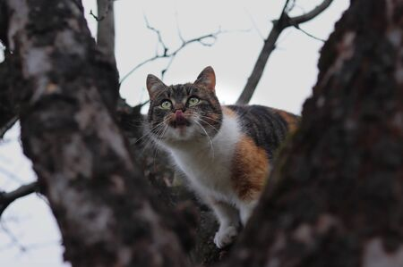 Curious domestic cat climbs on branch of cherry tree and looking for birds for some play with them. Funny animal head. Frolicsome on tree. Plays with garden birds.