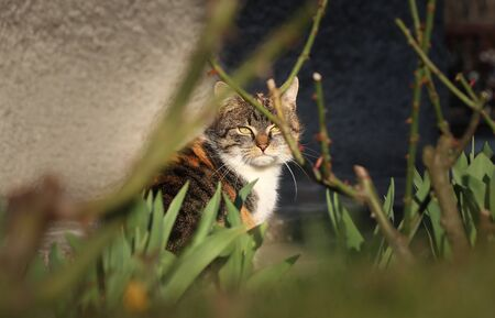 Courageous look of felis catus domesticus. Cruel and tough posture indicate that the kitten has many experience with strange people. Look through thorns and grass.