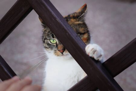 Playful expresion of domestic cat with green eyes watch with interest man´s hand and waits when hand come near to her and she will can attack. Ready for destroy. Felis catus domesticus. Stok Fotoğraf