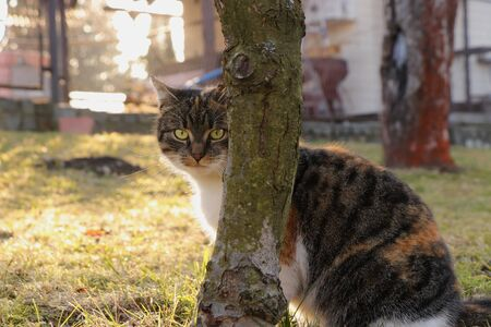 Well concealed domesticated cat behind apple tree and she is ready for some action. Colored kitten is very careful while hunting. Only the head blows from behind trunk.