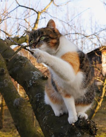 Adorable kitten plays with part of tree in autumn times. Felis catus domesticus sits on thick trunk and with paw attack on small branch. Interested animal face