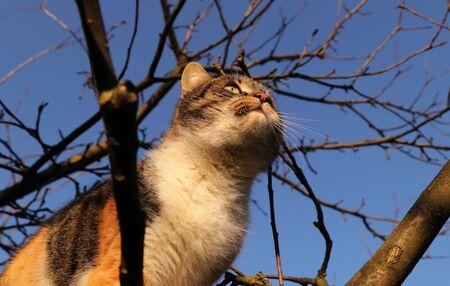 Inquires and adorable cat walks on thick branch of apple tree at the garden at sunset in autumn times. The best friend of human. Absolutely perfect stability and accuracy of kitten 写真素材