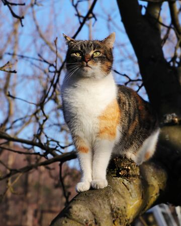 Distinguished queen of cats sits on apple tree and watchs her demesne. Adorable and high-minded kitten with magical green eyes. Felis catus domesticus is ready take over another territory 写真素材
