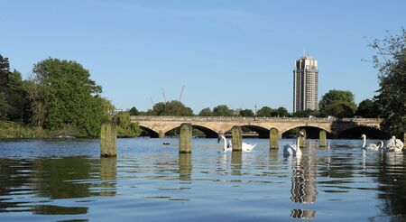 Small pedestrian bridge in Hyde park - Serpentine Bridge. Serpentine River with white swans sailing around. Sluice gate of the 1730 dam at the eastern end of the lake. Panorama of London nature. Stock Photo