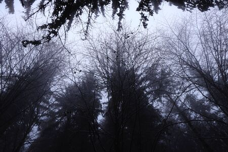 Dark atmosphere. The crowns of deciduous trees immersed in white mist. Gloomy, sad, mournful and sad mood. Darkness and emptiness fill this photo.