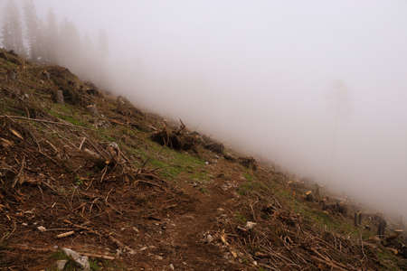 Mysterious path across the hinterland on the Hochlantsch mountain in the Fischbach Alps, Austria. Devastated nature after the destructive forces of the natural elements.