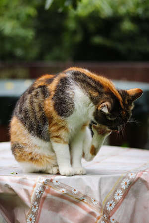 Naughty cat has taken a fighting stance and is waiting for the enemy's mistake. Feline with green eyes look at camera. A walk around her territory at morning Stock Photo