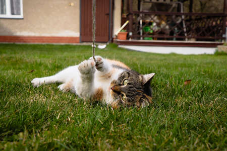 Little cat tirelessly plays with the string with his claws. Felis catus domesticus with green eyes is interested in playing with a short rope.