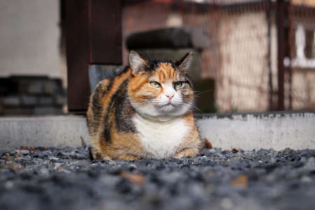 Frown of a green-eyed house cat peering keenly into the camera. Felis catus domesticus watches his territory with annoyance. Czech garden. Close up on feline Imagens