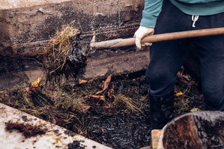 village gardener stands in the mud and uses a pitchfork to put manure in the wheelbarrow, which smells awful. Manure is composed of mud, poop, straw and dried grass. 版權商用圖片