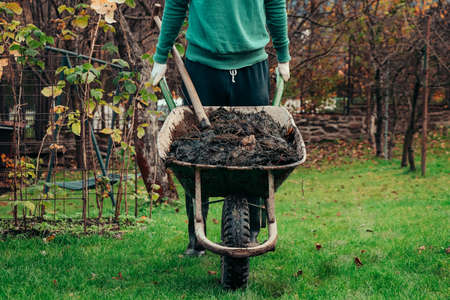 Young man in a village drives a wheelbarrow full of manure to his patch, where he uses it for improved soil fertility and bioversity. landscaping. Autumn Work. Working clothes.
