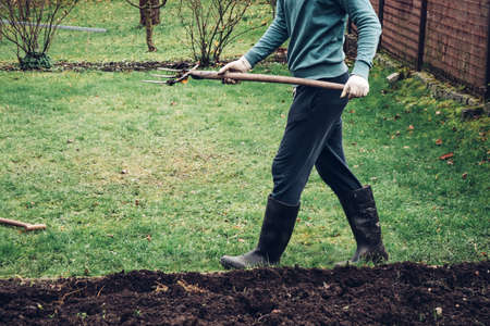 young gardener in old tracksuit doing dirty work. The farmer uses a wooden pitchfork to put manure into the soil with micronutrients for future vegetables. Autumn hard work. 版權商用圖片