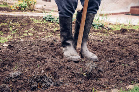 Experienced gardener digs his garden. The young man stands in the muddy ground and makes a special groove for manure. Introducing rural day-to-day work in the countryside.