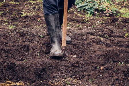 experienced farmer gets better at spade wet clay. Engraving the garden with a unique tool. Hand digging a garden. The man uses his foot to push the spade, which he inserts into the clay.