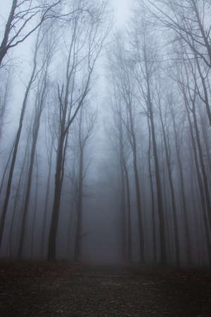 Depressed and frustrating mood photos. The forest is lost in the fog. morning sun piercing through fog. Way to hell. Bare tree branches on a hazy day.