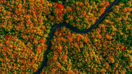 Stunning aerial view of road with curves crossing dense forest in autumn colors Imagens - 90746251