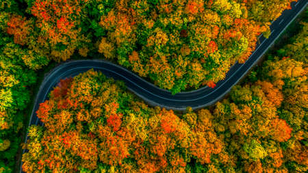 Aerial view of thick forest in autumn with road cutting through it