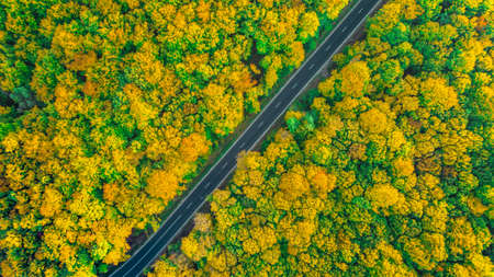 Thick golden colored forest crossed by a diagonal asphalt road Stock Photo