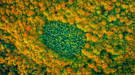 Aerial view of coniferous evergreen forest completely surrounded