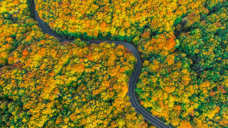 Aerial view of winding road in fall colored thick forest