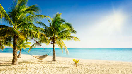 Sunny carribean beach with palmtrees and traditional braided hammock