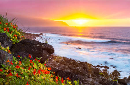Pink sunset with flowers and the ocean on the north coast of Madeira Island, Portugal