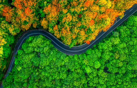 Aerial view of thick forest with road splitting it in two seasons. Collage between autumn and summer Banque d'images