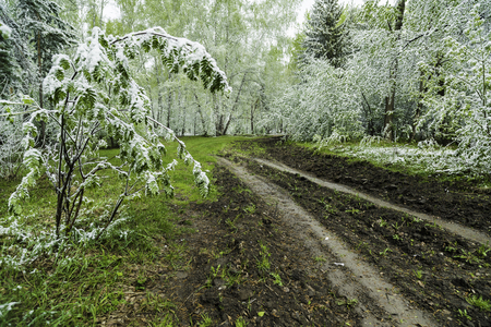 Green leaves of the trees and grass covered with snow