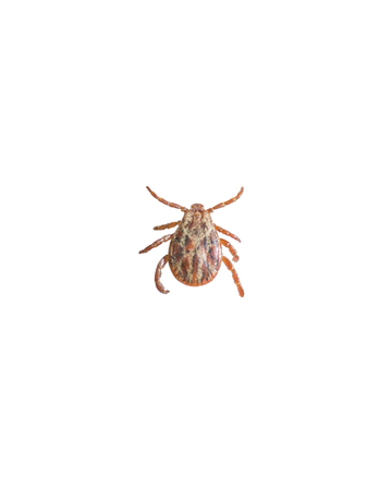 Ticks mites on white background