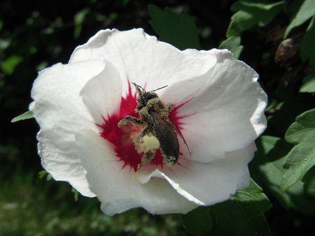 Bee Detailed in Flower