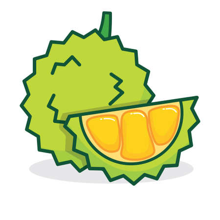 Durian vector illustration isolated on white background, durian cartoon illustration Illustration