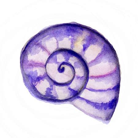 手塗装水彩画貝殻ベクトルで行われました。美しい手描きのシェルと水彩の海のベクトル。熱帯の休暇の図。ビーチや海の旅行します。熱帯の楽園
