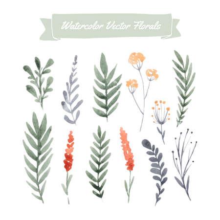 Set di fiori dipinti a mano acquerello e foglie Archivio Fotografico - 38214487