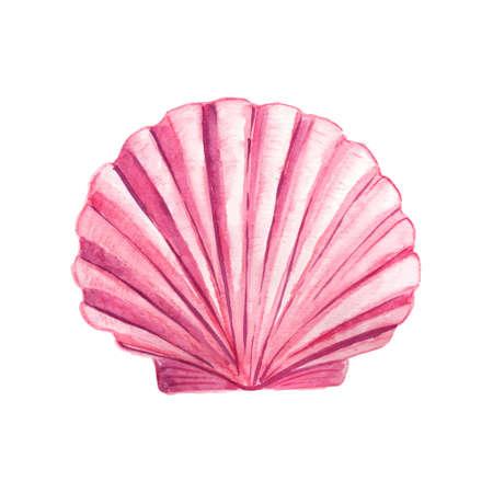 貝殻の水彩イラスト。手には、水中の要素のデザインが描かれました。芸術的なベクトル海洋デザイン要素。グリーティング カード、印刷やその他  イラスト・ベクター素材