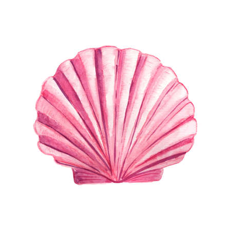 seashell: Seashell watercolor illustration. Hand drawn underwater element design. Artistic vector marine design element. Illustration for greeting cards, printing and other design projects. Illustration